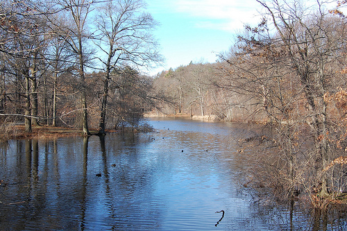 Scarboro Pond, Franklin Park